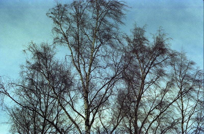 Tree tops in wind.